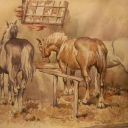 chevaux au repos
