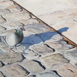 Pigeon sur le port